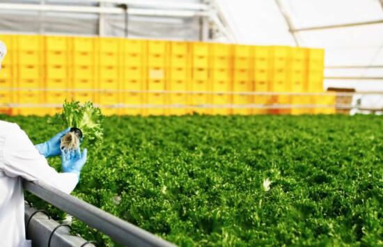 zbiorniki magazynowe z tworzyw sztucznych dla zakładów rolnych